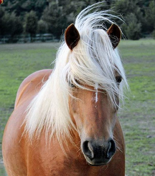 Our Horses -